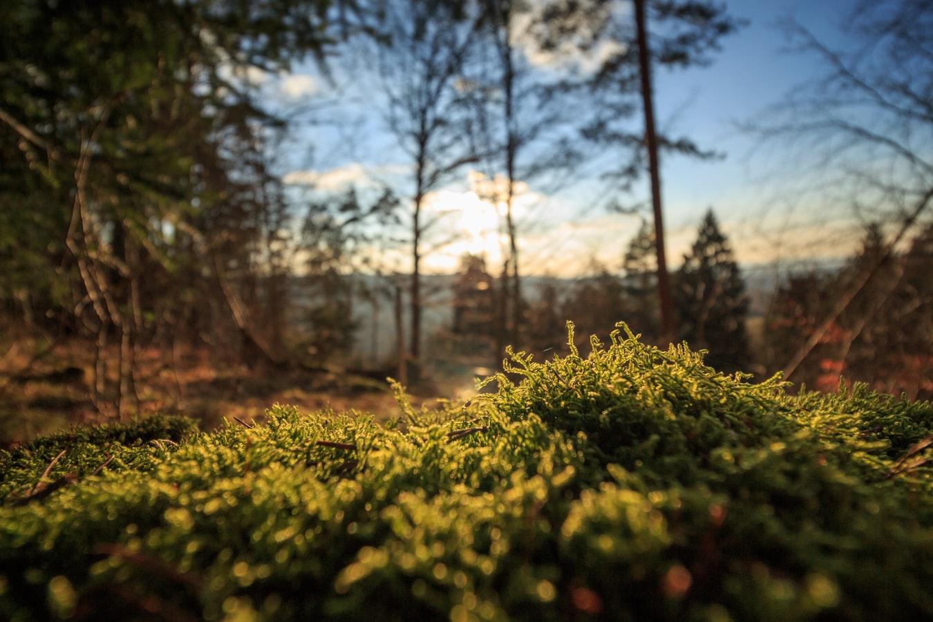 Kastelenhof: Zo veel meer dan een bungalowpark